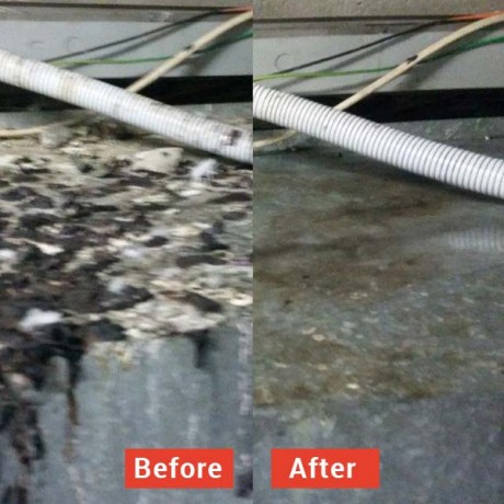 High pressure water cleaning of bird droppings before and after