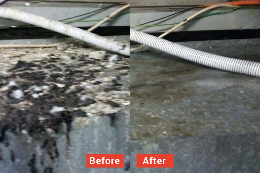 Before and after bird poo removal services in Melbourne